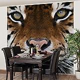 Apalis Vliestapete Tiger Eyes Fototapete Quadrat   Vlies Tapete Wandtapete Wandbild Foto 3D Fototapete für Schlafzimmer Wohnzimmer Küche   Größe: 288x288 cm, braun, 95288