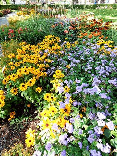 Qulista Samenhaus - Rarität Staudenbeet 'Bienen-Magnet' Bienenparadies für Bienen, Hummeln und Schmetterlinge, Blumensamen Mischung winterhart mehrjährig