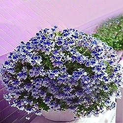 Inovey 100 PCs Geranie Samen Garten Blumen Kerne mehrjährig Hof Balkon Outdoor Pflanze - 3