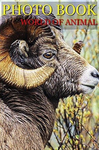 photo-book-wolrd-of-animal-vol4-photography-photo-book-english-edition