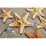 5 Starfish Small - size 4 - 6 cm - Sea Shells