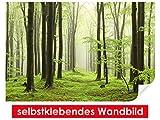 XXL-Tapeten selbstklebendes Wandbild Beech Forest – leicht zu verkleben – Wallprint, Wallpaper, Poster, Vinylfolie mit Punktkleber für Wände, Türen, Möbel und alle glatten Oberflächen von Trendwände