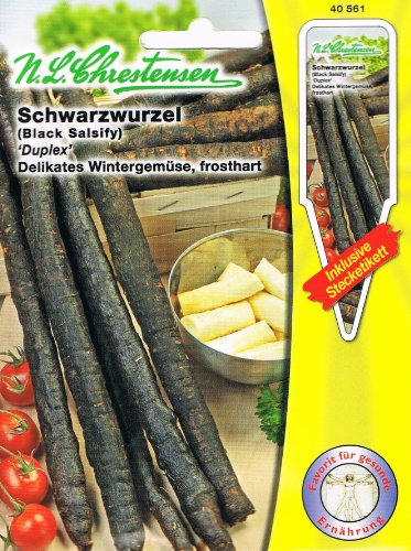 Schwarzwurzel 'Duplex' delikates Wintergemüse, frosthart ( mit Stecketikett)