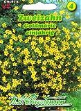Zweizahn 'Goldmarie' gelb,einjährig, sehr lange blühende Beet- und Balkonpflanze 'Bidens ferulifolia'