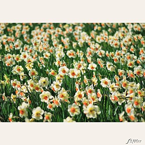 Garten Schlüter 508941
