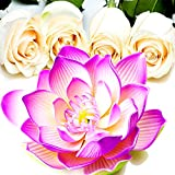 Pink Lotus & White Roses Scented Potpourri TRIPLE SCENTED EXTRA STRONG 25gms Vegan & Cruelty Free