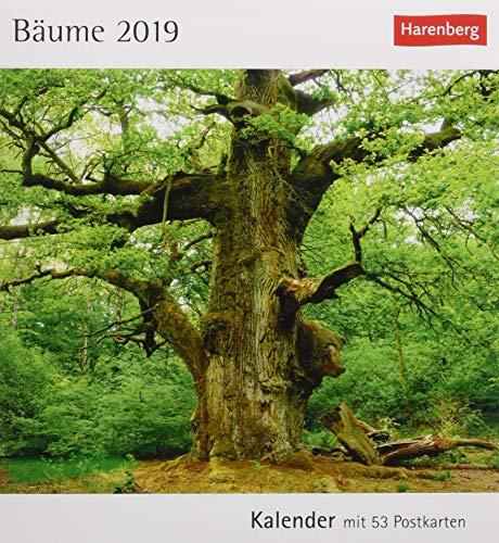 Bäume - Kalender 2019: Kalender mit 53 Postkarten