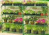 Anaelle Pandamoto 2 X Serre de Jardin Grande Flexibilité 4 Niveaux Armature en Métal, Taille: 106*90*28cm, Poids: 5.3kg...