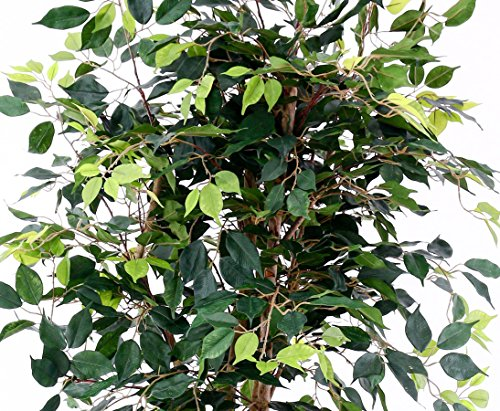 Künstlicher Ficus Elegance h:175cm mit 1672 grünen Blättern aus Textilfaser, Naturstämmen