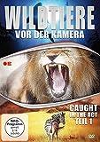 Wildtiere vor der Kamera - Caught in the Act (Teil 1) [DVD]