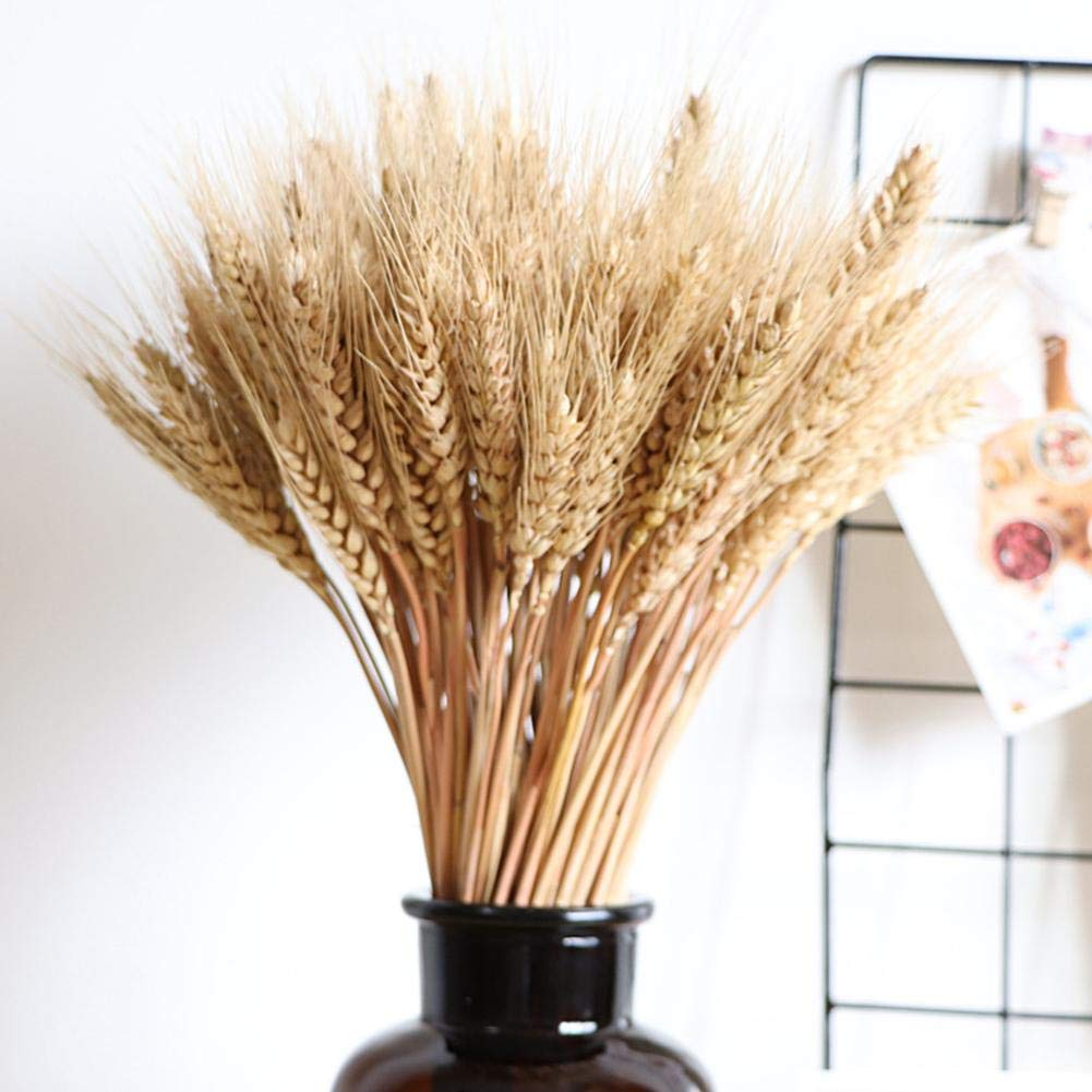 100pcs Trigo seco Bouquet de hierba Decoración Decoraciones de otoño, accesorios de artesanía para bodas de Navidad Alta…