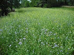 6kg Gaggenauer Bienenweide Blühmischung