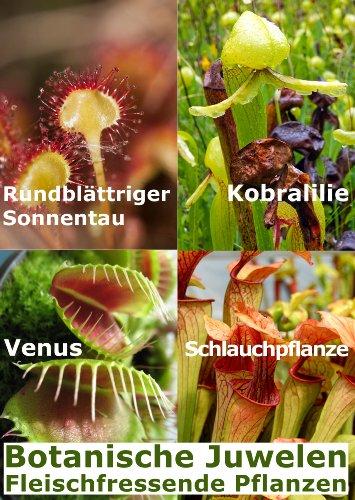 Gewächshaus Botanische Juwelen Fleischfressende Pflanzen