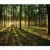 murando - Fototapete Wald 400x280 cm - Vlies Tapete - Moderne Wanddeko - Design Tapete - Wandtapete - Wand Dekoration - Wald Sonnenschein Bäume Natur Landschaft c-B-0027-a-b