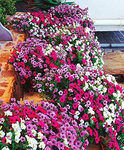 Hängende Blütezeit: Von Juni bis November