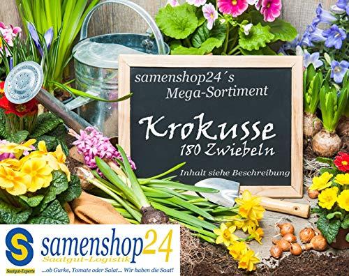 Samenshop24® Mega Krokus-Sortiment 180 Stück Blumenzwiebeln