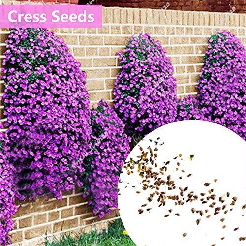 SHUNYUS 100 Stücke Rock Kresse Samen Bodendecker Blume Creeping Thymian Samen Blumensamenmatte Für Outdoor Mehrjährige Pflanzen - Grün