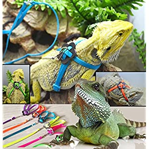 zantec Generic verstellbar Reptile Eidechse Harness Leine verstellbaren Multicolor Light Soft Fashion (grün)