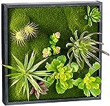 Carlo Milano Pflanzenbilder: Vertikaler Wandgarten Karl mit Deko-Pflanzen, 30 x 30 cm (Pflanzen Bild)