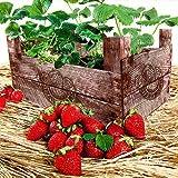 20 Servietten Strawberry Case - Erdbeerkorb / Erdbeeren / Früchte 33x33cm