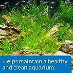 API AQUARIUM START UP PACK Water Conditioner 37 ml Bottle 2-Pack 12
