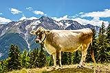 Artland Qualitätsbilder I Wandtattoo Wandsticker Wandaufkleber 60 x 40 cm Tiere Haustiere Kuh Foto Grün C8CR Bergkuh in Den Alpen im Sommer