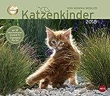 Wegler Katzenkinder Maxi Postkartenkalender - Kalender 2018