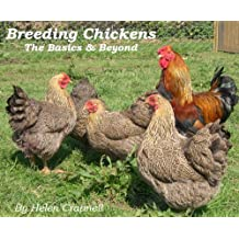 Breeding Chickens - the Basics and Beyond