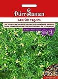 Lakritz-Tagetes Würztagetes Tagetes filifolia