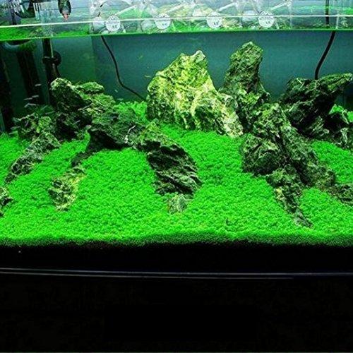 Pflanzen Licht Aquarium (Aquarium-Pflanzensamen, 1 Beutel, schnellwachsend, Doppelblätter, teppichartiges Wassergras für Fischglas, Aquarium, Garten-Dekoration)