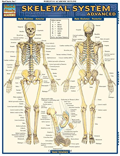 Skeletal System: Advanced (Quick Study: Academic) por Vincent Perez