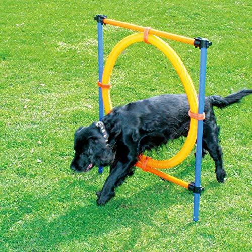 Pawise Haustier-Spielzeug für Hunde im Freien, Agility-Training, Trainingsgerät für Agilität, Starter-Set