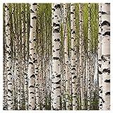 Wallario XXL Garten-Poster Outdoor-Poster - Birkenwald - Baumstämme in schwarz weiß in Premiumqualität, für den Außeneinsatz geeignet