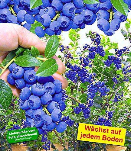 ➡ ▷ Kletterpflanzen kaufen 🏅