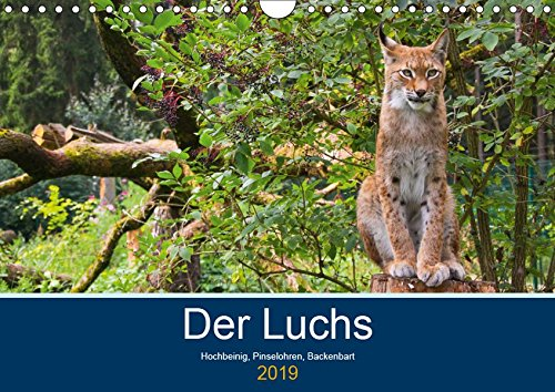 Der Luchs - Hochbeinig, Pinselohren, Backenbart (Wandkalender 2019 DIN A4 quer): Unsere größten und seltensten Katzen. (Monatskalender, 14 Seiten ) (CALVENDO Tiere)
