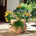 Gärtner Pötschke Terracotta-Etagen-Pflanztopf von Gärtner Pötschke - Du und dein Garten