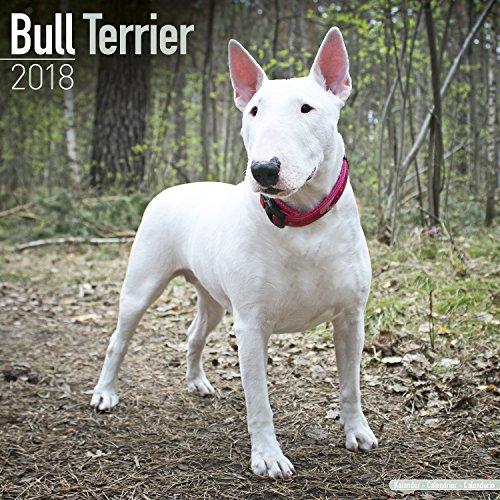 Bull Terrier (Square)