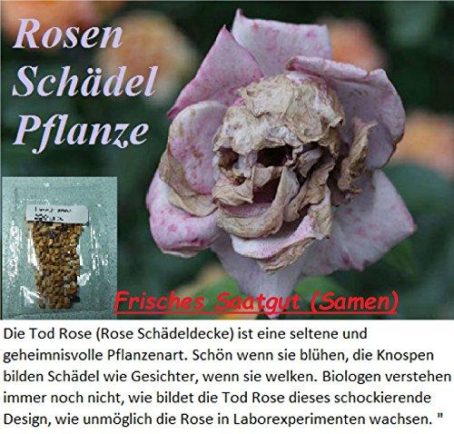 10x-rosen-schadel-samen-garten-blume-pflanze-rose-raritat-antirrhinummajus-frisches-saatgut-7