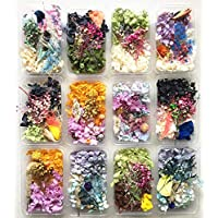 ASH 1 Box Real Dried Flower Dry Plants For Aromatherapy Candle Epoxy Resin Pendant Necklace Jewelry Making Craft DIY Accessories