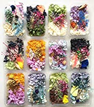 ASH 1 Box Real Dried Flower Dry Plants For Aromatherapy Candle Epoxy Resin Pendant Necklace Jewelry Making Cra