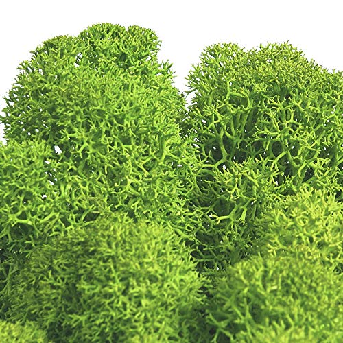 Abitoverde Moss Roma Muschio stabilizzato Muscs et lichens stabilisés : reindermess Sachet de 500 g couleur MayGreen 15