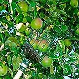 Burgon & Ball Apfelpflücker