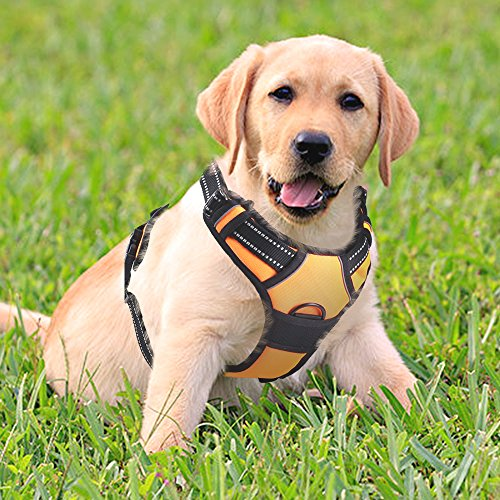 Rabbitgoo Adjustable Refletive Dog Harness Outdoor Pet Vest with Handle Easy Control for Small Dogs & Durable Material Orange Test