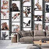 Fotomurales PURO ! Tres colores a elegir - Fotomurales realistas ! !Papel pintado tejido no tejido! !Un panel decorativo! !Fotomural! !Los cuadros para la pared en la dimensión XXL! 10 m ! Animal Gato Perro Caballo Cerdo Conejo g-C-0026-j-b