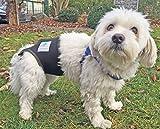 Läufigkeitshose, Läufigkeitshöschen, Größe XS, Hundeschutzhose, Inkontinenzhöschen für Hunde - 5