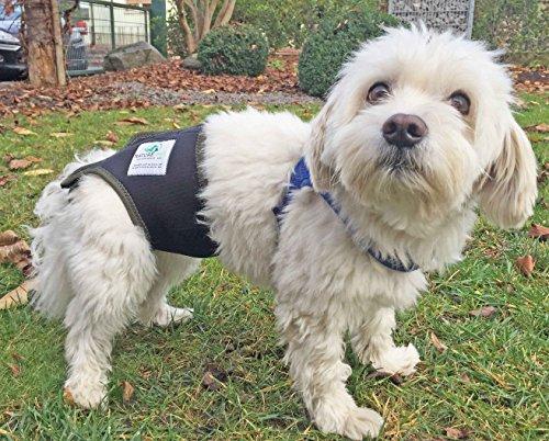 Läufigkeitshose, Läufigkeitshöschen, Größe S, Hundeschutzhose, Inkontinenzhöschen für Hunde - 5
