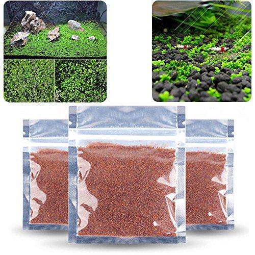 LEEBA Plantas Acuario Semillas Fácil Acuático Crecimiento