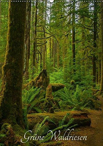 Grüne Waldriesen / 2019 (Wandkalender 2019 DIN A2 hoch): Uralte Bäume und grüner Regenwald an der nordamerikanischen Westküste (Monatskalender, 14 Seiten ) (CALVENDO Natur)