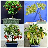 #6: Bonsai Fruit Seeds Combo #8 - Pomegranate Cherry Gooseberry Banana Seeds Pack