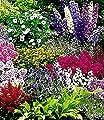 BALDUR-Garten Buntes Staudenbeet 'Multi-Colour', Staudengarten, Stauden-Sortiment 12 Pflanzen von Baldur-Garten - Du und dein Garten